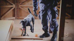 police، Drug, Police Dog Squad