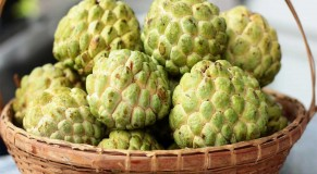 custard-apple-2