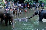 dead-wild-elephant